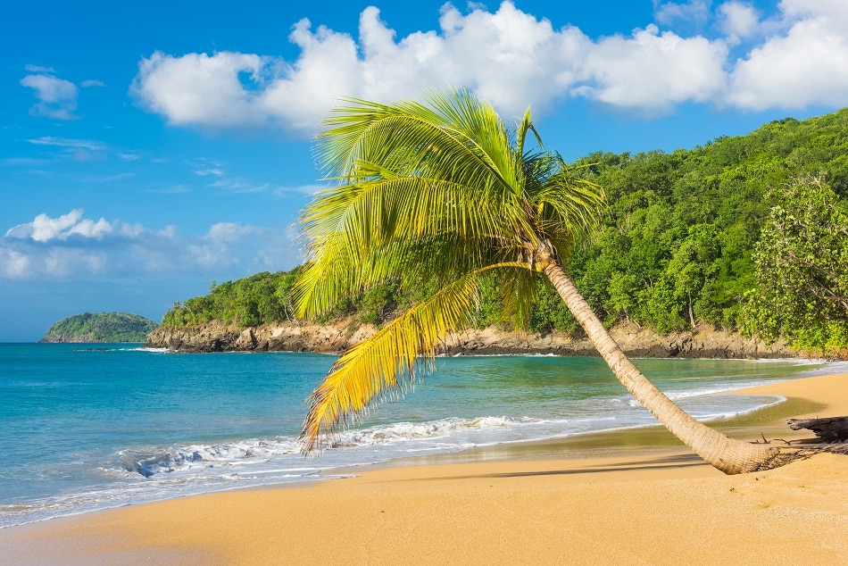 Where Is Death In Paradise Filmed? 4